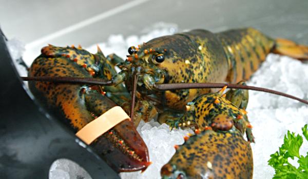 pesce fresco ristorante lecce
